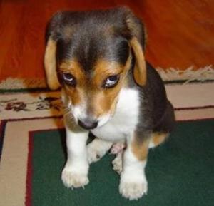 sad-dog-1